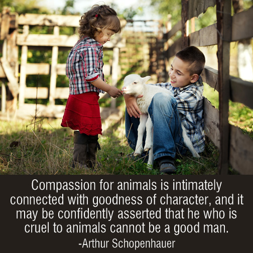 Compassion-for-animals