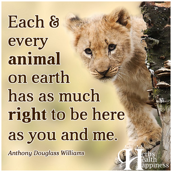 Each-and-every-animal-on-earth