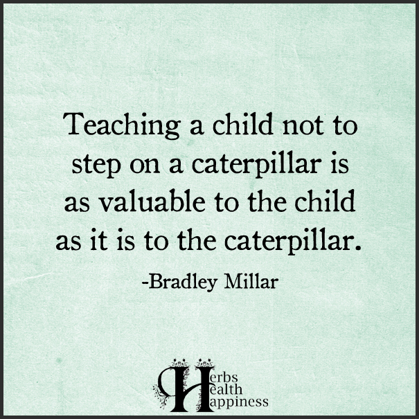 NEW - Teaching A Child Not To Step On A Caterpillar