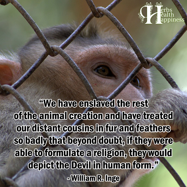We Have Enslaved The Rest Of The Animal Creation