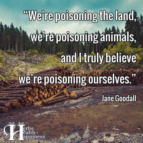 We're Poisoning The Land