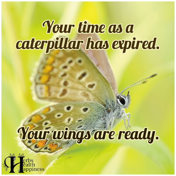 Your-time-as-a-caterpillar-has-expired