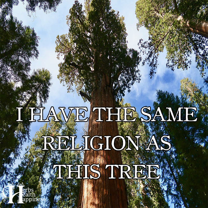I Have The Same Religion As This Tree