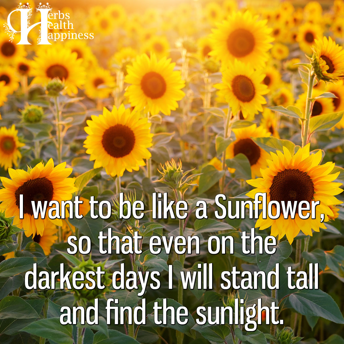 I Want To Be Like A Sunflower