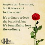 Anyone Can Love A Rose