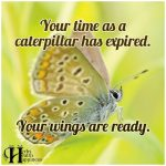 Your Time As A Caterpillar Has Expired